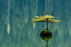Alisunflower
